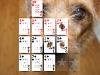 Full Deck Poker 4